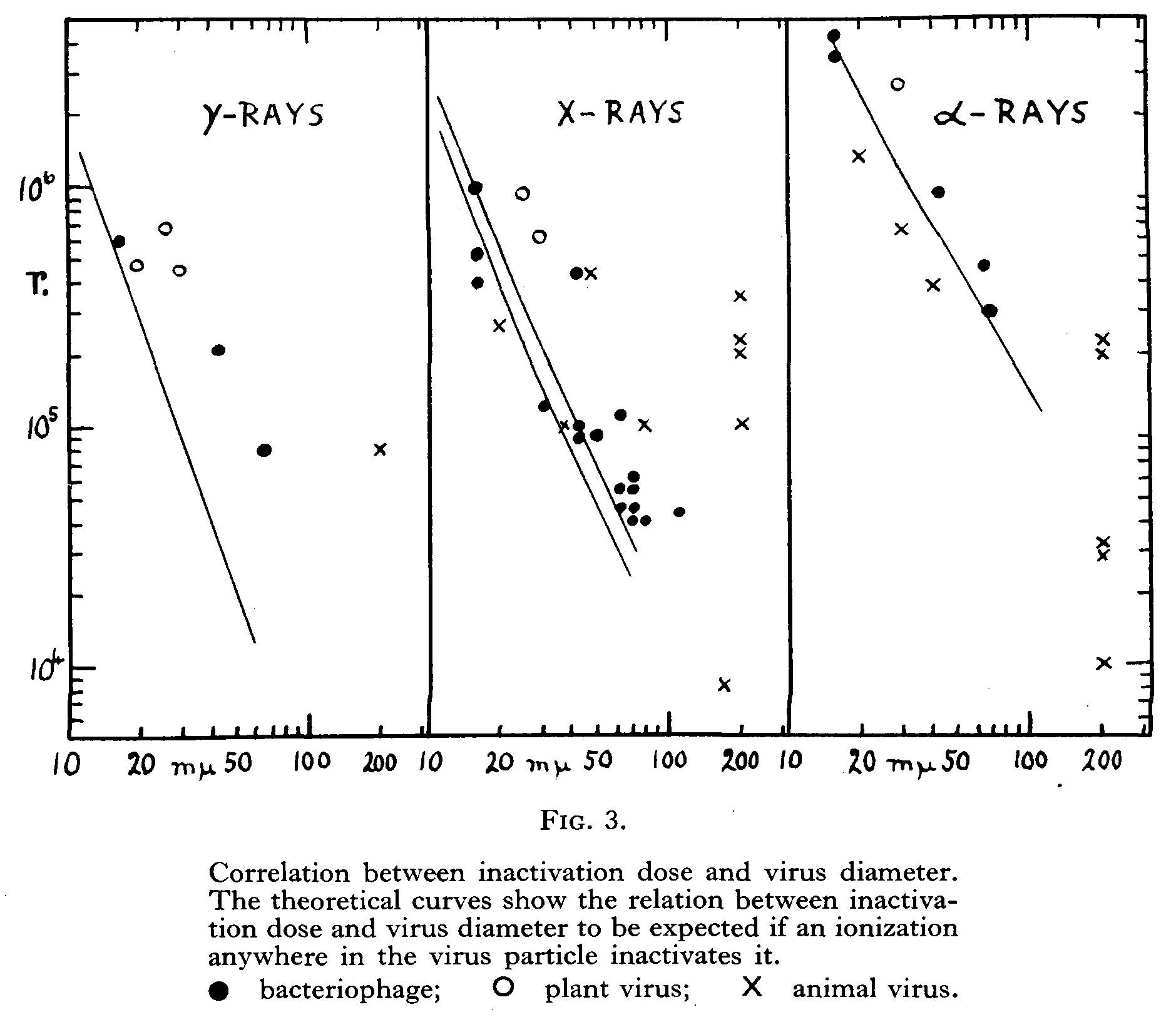 Chart showing correlation between active dose and virus diameter